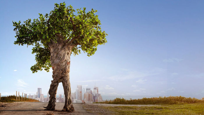 Unilever's Walking Talking Tree Moves to the City to Escape Deforestation