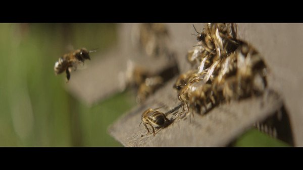 Tiempo BBDO & Greenpeace manage to get 250,000 Bees to sign a petition against pesticides