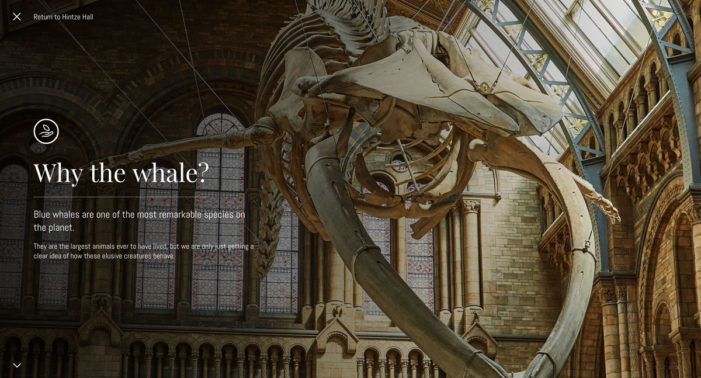 AKQA's Potato unveils Blue Whale Project for The Natural History Museum