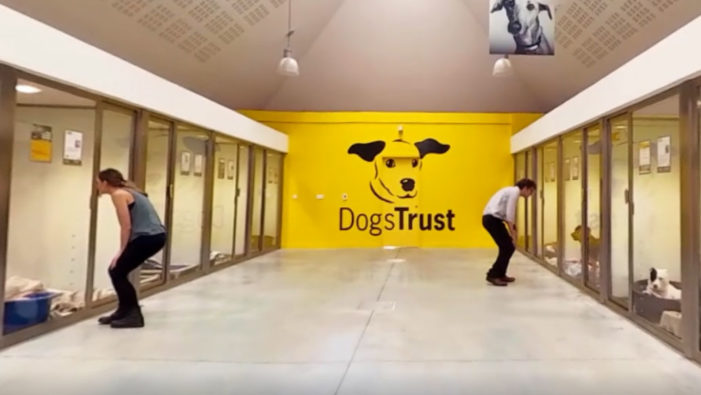 Dogs Trust use VR for the first time for face-to-face Fundraising