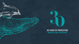 Whale and Dolphin Conservation launches 30th anniversary brand identity