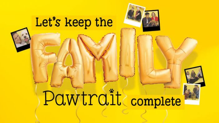 TMW Unlimited steals hearts with moving film for Dogs Trust