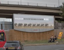 WCRS and Born Free highlighting the elephant crises in Africa with striking OOH and social campaign