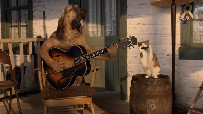 Pets have got the blues in new MORE TH>N campaign by VCCP
